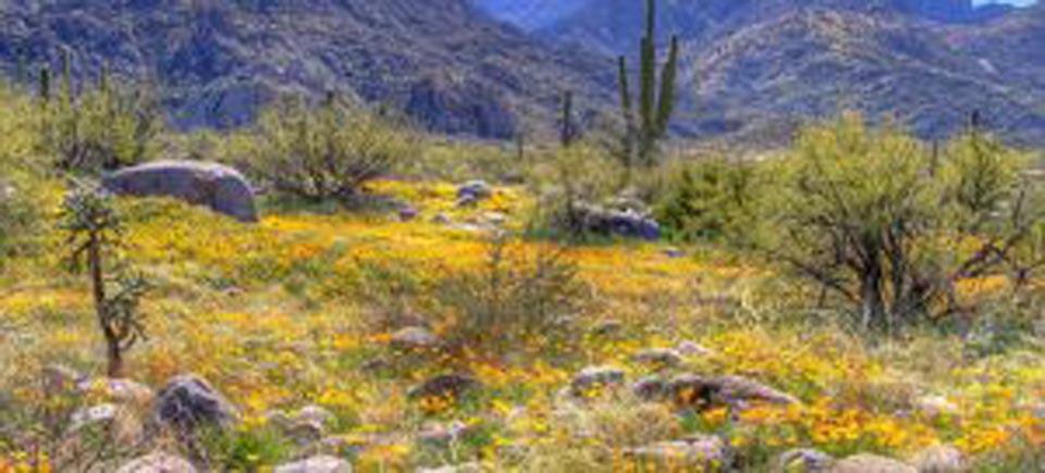 Tucson, Arizona Real Estate Market Report March 2019